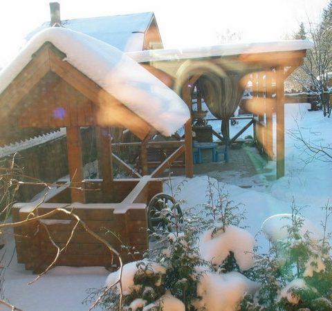 Изображение зимнего сада